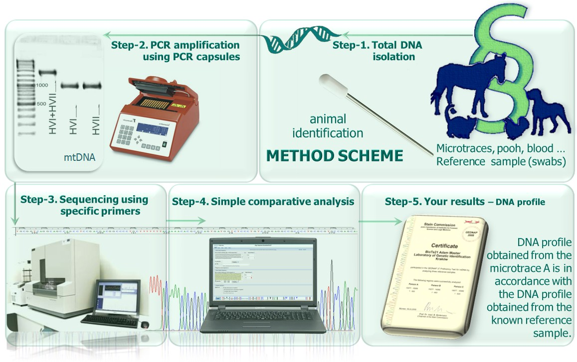 mtDNAtest-animal Method scheme