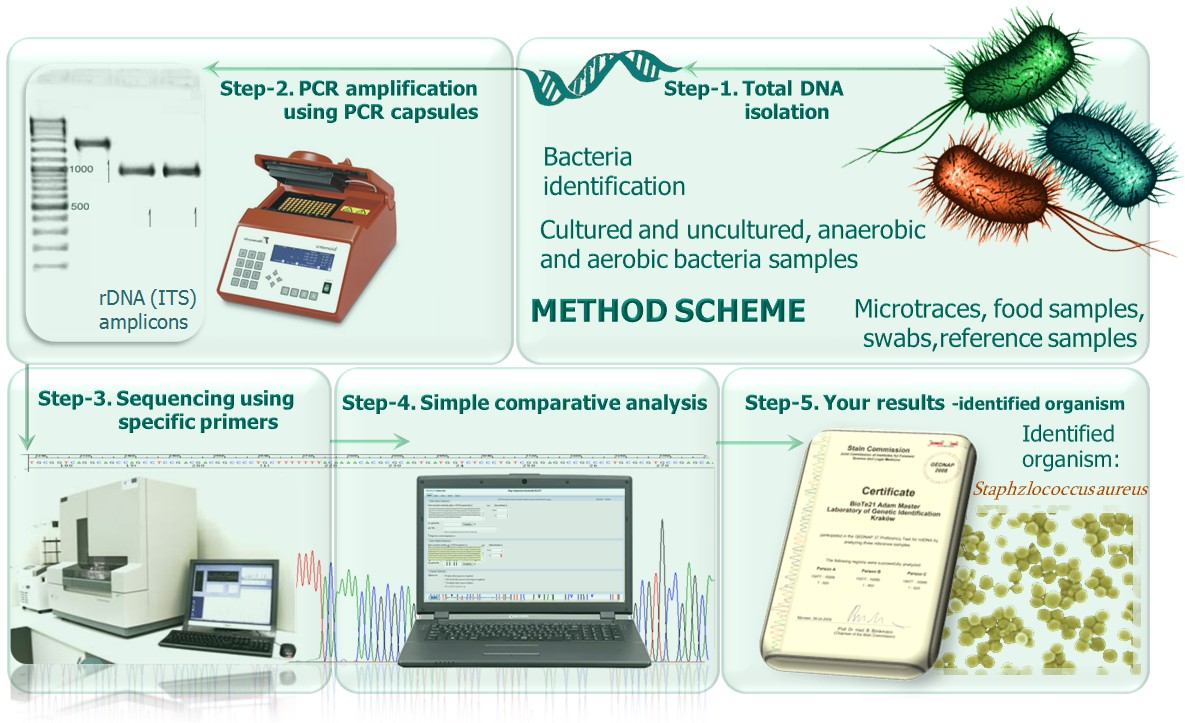 rDNAtest-bacteria Method scheme